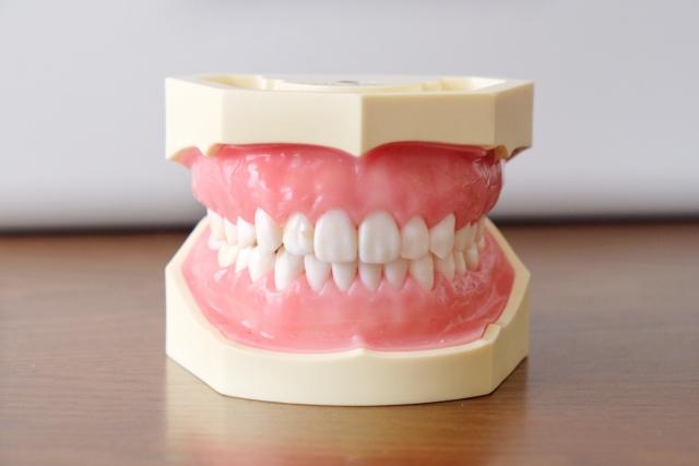 うつくしい歯並びで結婚式を迎える「ブライダルに向けた矯正」とは