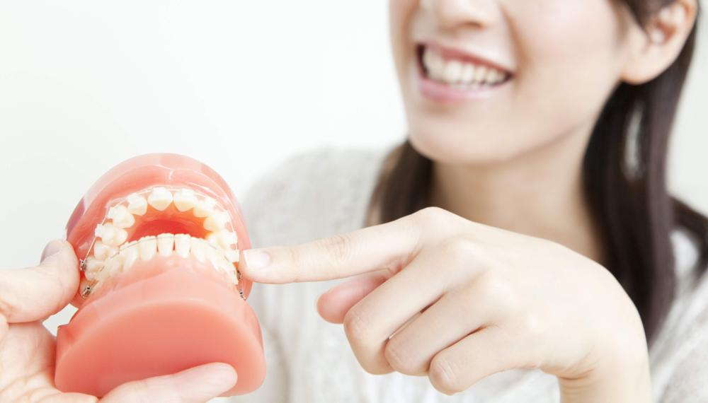 歯の模型で説明を受ける女性